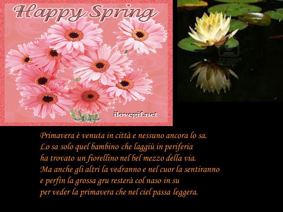 Primavera è venuta in città e nessuno ancora lo sa. Lo sa solo quel bambino che laggiù in periferia ha trovato un fiorellino nel bel mezzo della via.