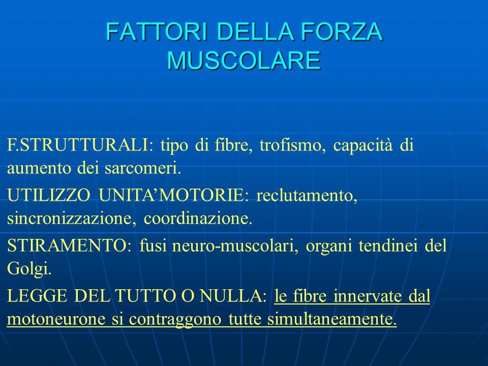 FATTORI DELLA FORZA MUSCOLARE F.STRUTTURALI: tipo di fibre, trofismo, capacità di aumento dei sarcomeri. UTILIZZO UNITA'MOTORIE: reclutamento, sincron