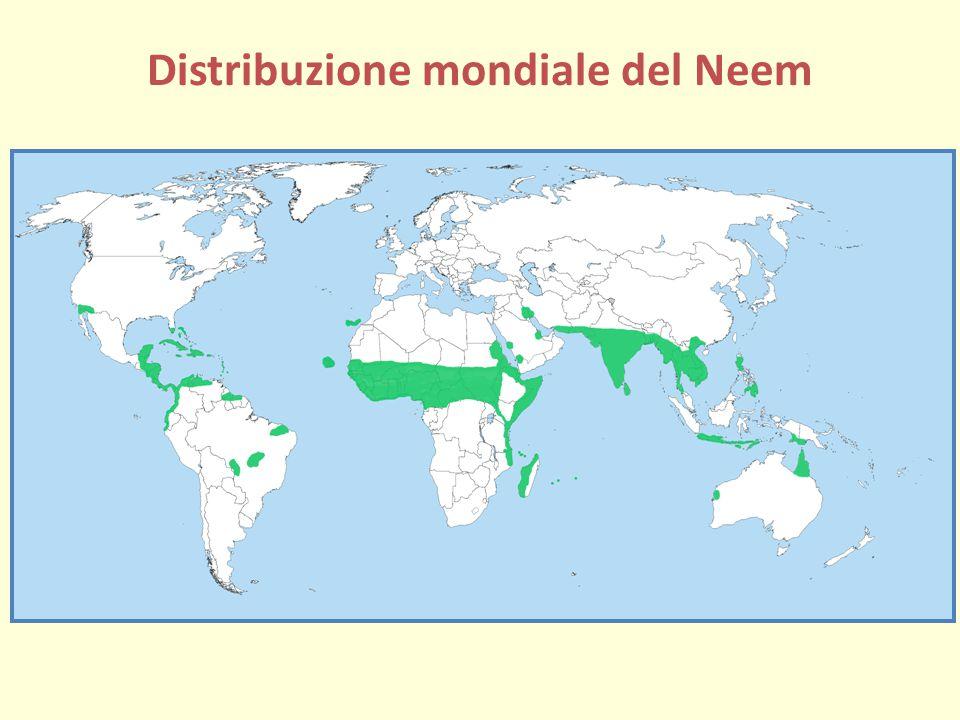Distribuzione mondiale del Neem