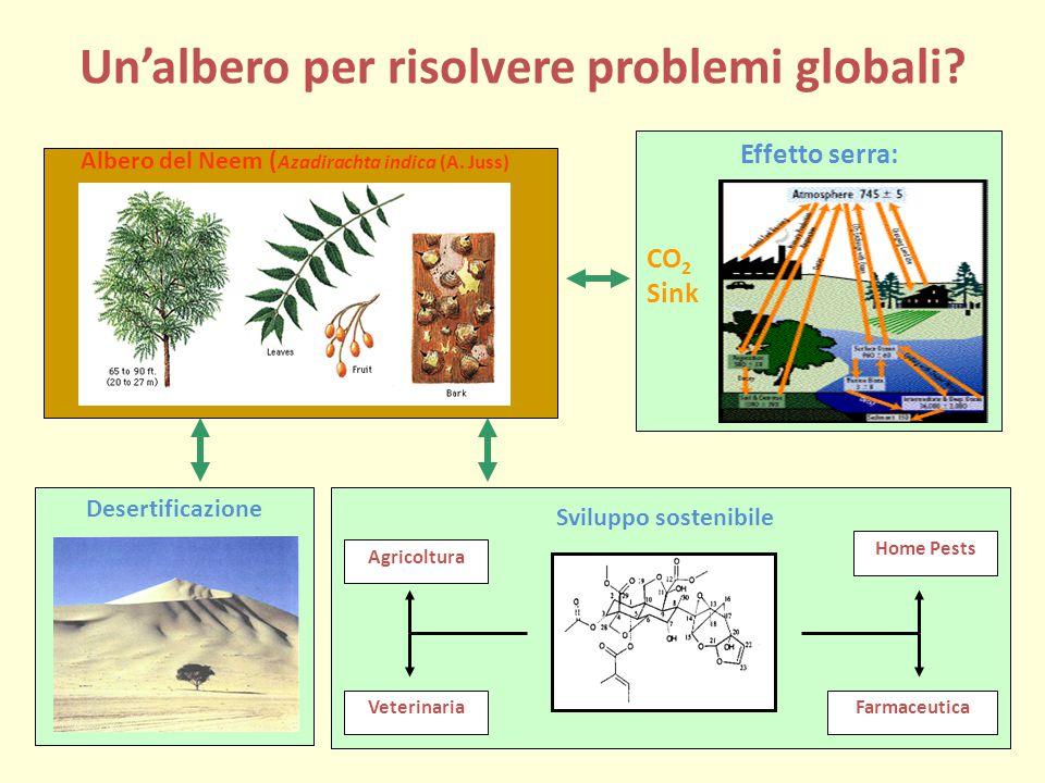 Un'albero per risolvere problemi globali.