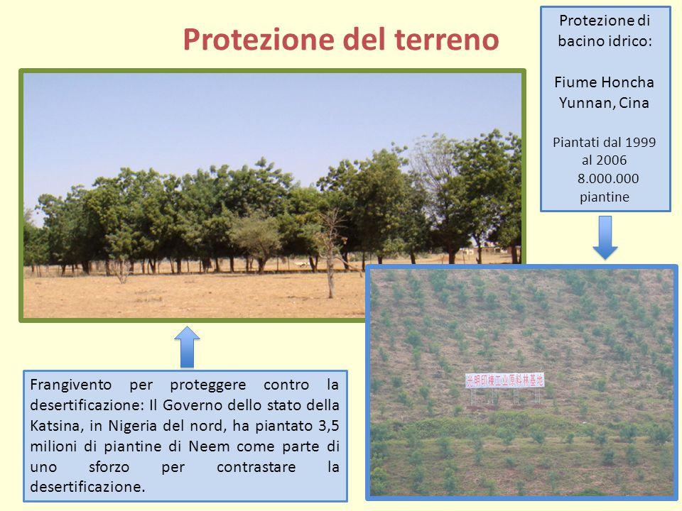 Protezione del terreno Protezione di bacino idrico: Fiume Honcha Yunnan, Cina Piantati dal 1999 al 2006 8.000.000 piantine Frangivento per proteggere contro la desertificazione: Il Governo dello stato della Katsina, in Nigeria del nord, ha piantato 3,5 milioni di piantine di Neem come parte di uno sforzo per contrastare la desertificazione.