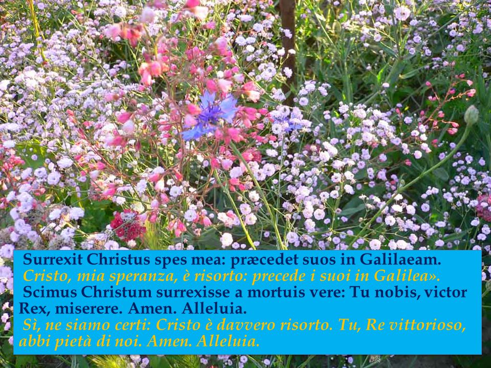 Sepulcrum Christi viventis, et gloriam vidi resurgentis, «La tomba del Cristo vivente, la gloria del Cristo risorto, angelicos testes, sudarium et ves