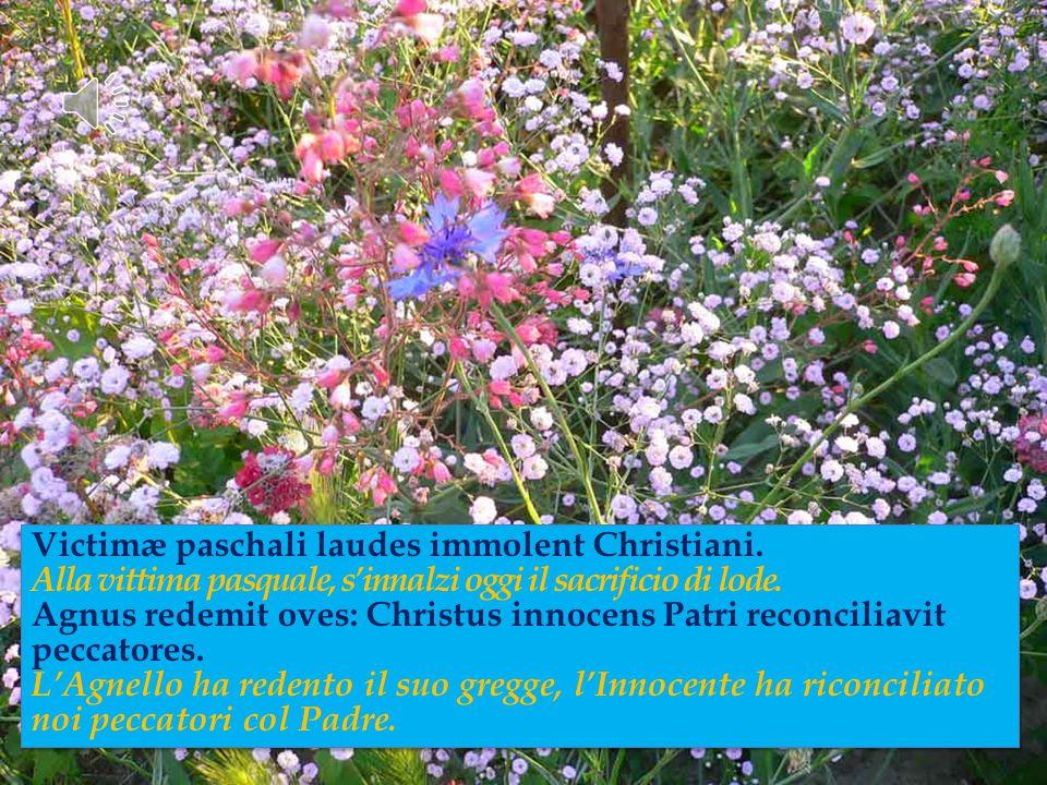 Cristo è speranza e conforto in modo particolare per le comunità cristiane che maggiormente sono provate a causa della fede da discriminazioni e persecuzioni.