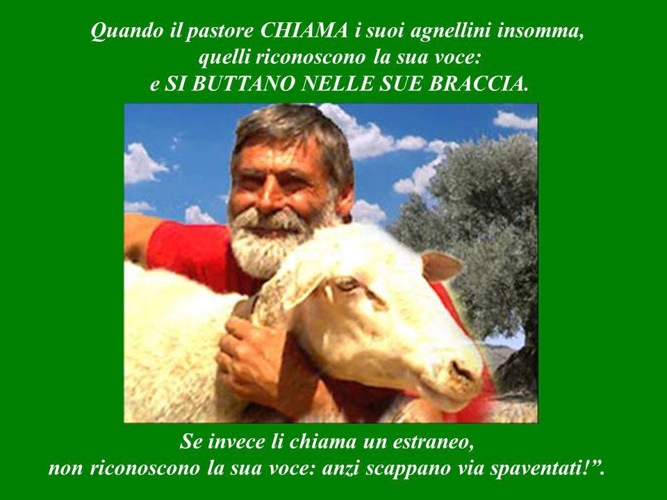 Il pastore invece entra sempre dalla porta principale dell'ovile: il guardiano lo vede e subito gli apre.