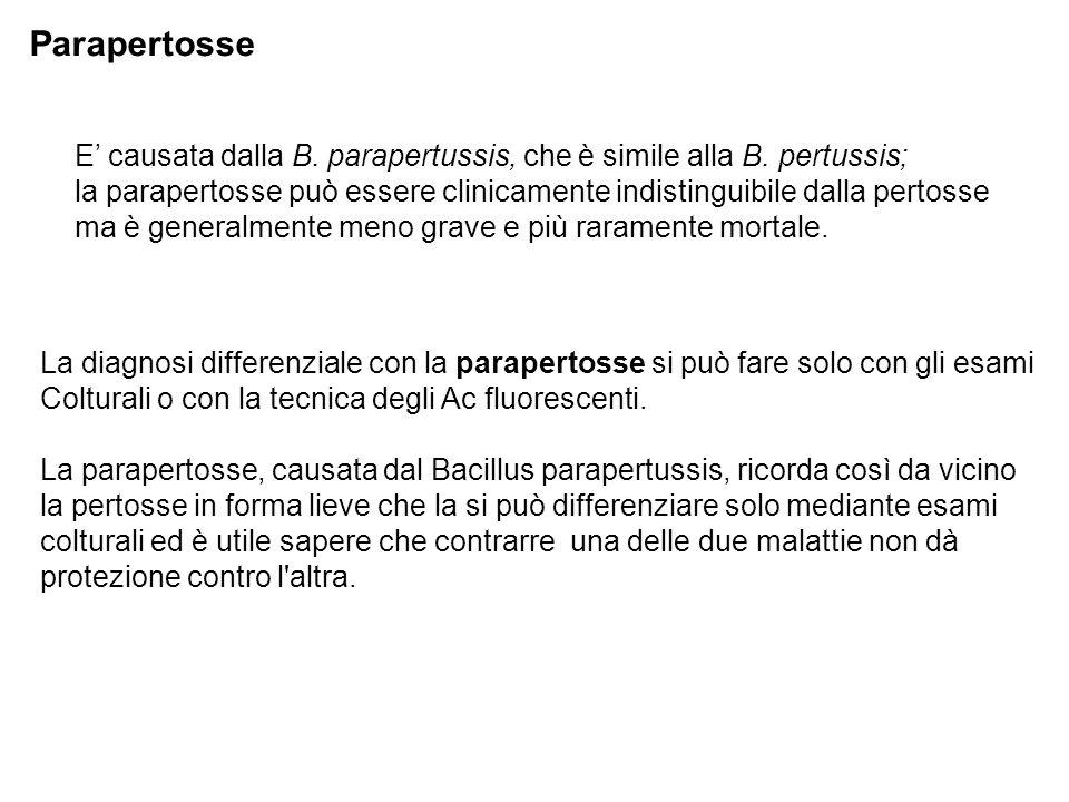 E' causata dalla B. parapertussis, che è simile alla B. pertussis; la parapertosse può essere clinicamente indistinguibile dalla pertosse ma è general