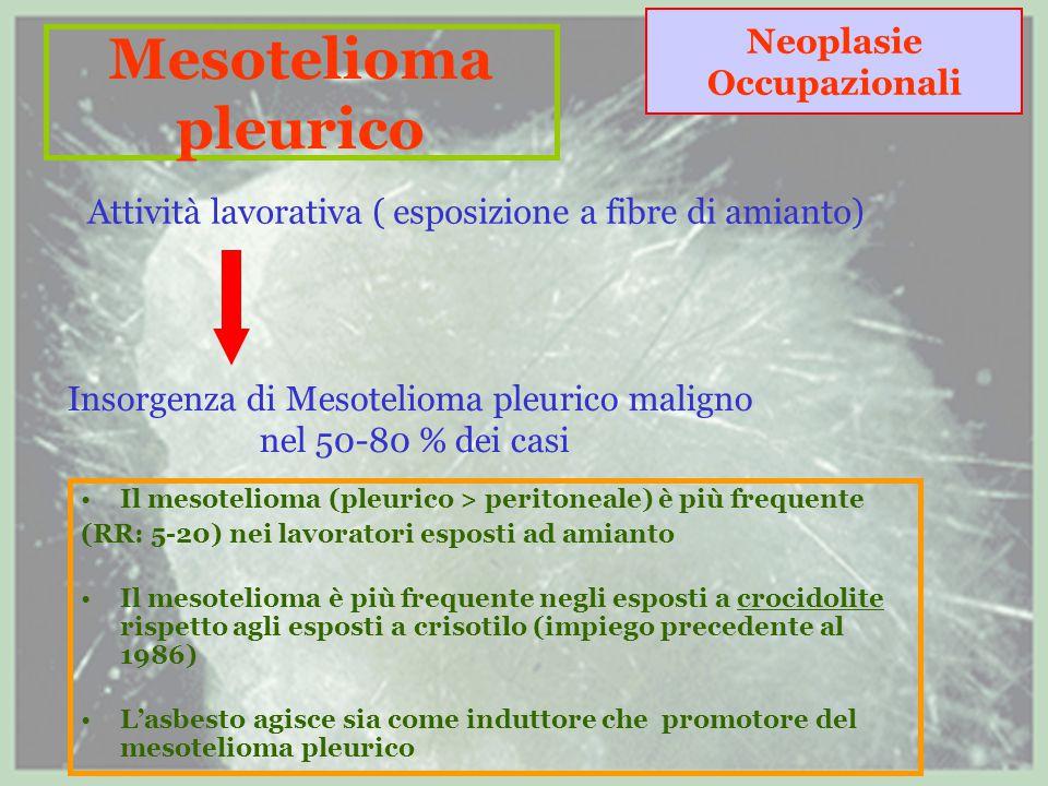 Mesotelioma pleurico Neoplasie Occupazionali Attività lavorativa ( esposizione a fibre di amianto) Insorgenza di Mesotelioma pleurico maligno nel 50-80 % dei casi Il mesotelioma (pleurico > peritoneale) è più frequente (RR: 5-20) nei lavoratori esposti ad amianto Il mesotelioma è più frequente negli esposti a crocidolite rispetto agli esposti a crisotilo (impiego precedente al 1986) L'asbesto agisce sia come induttore che promotore del mesotelioma pleurico