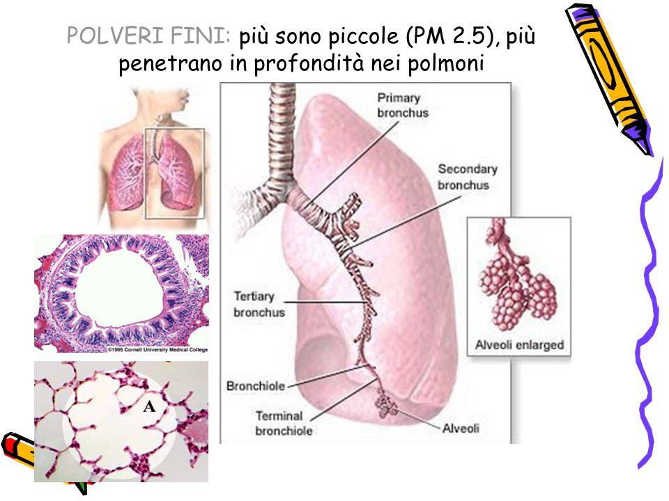 POLVERI FINI: più sono piccole (PM 2.5), più penetrano in profondità nei polmoni