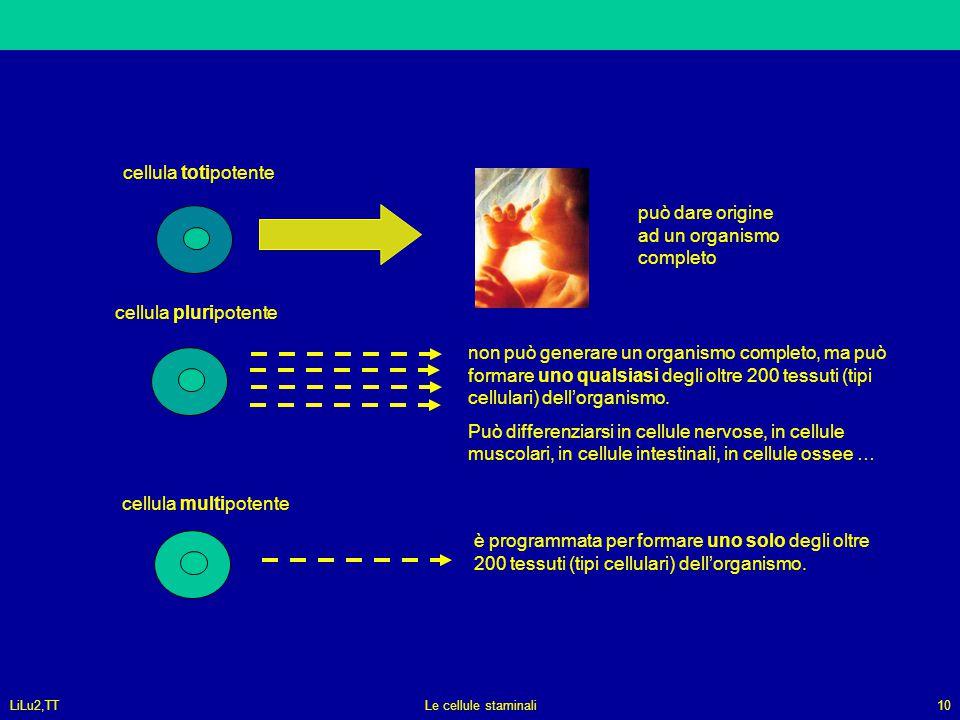 LiLu2,TTLe cellule staminali10 cellula totipotente può dare origine ad un organismo completo cellula pluripotente non può generare un organismo comple
