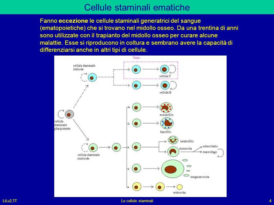 LiLu2,TTLe cellule staminali4 Cellule staminali ematiche Fanno eccezione le cellule staminali generatrici del sangue (ematopoietiche) che si trovano n