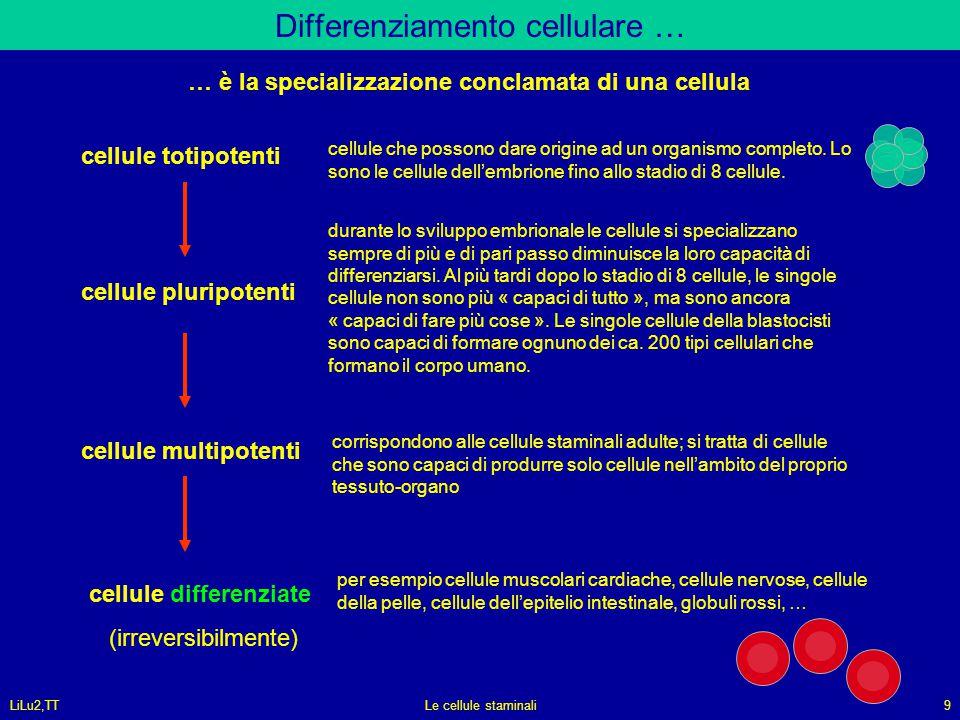 LiLu2,TTLe cellule staminali9 Differenziamento cellulare … cellule totipotenti cellule pluripotenti cellule multipotenti cellule differenziate (irreve