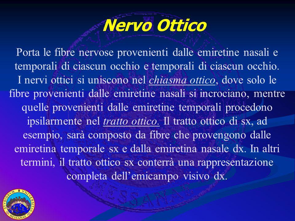 Porta le fibre nervose provenienti dalle emiretine nasali e temporali di ciascun occhio e temporali di ciascun occhio.