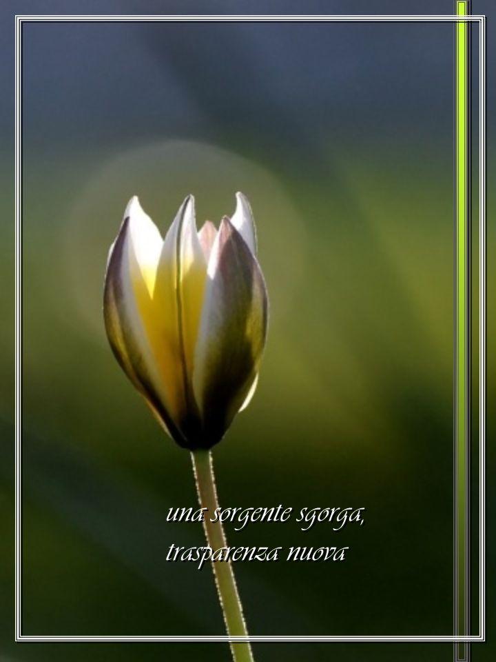Rianima in noi la speranza del Paradiso annunciato Rianima in noi la speranza del Paradiso annunciato