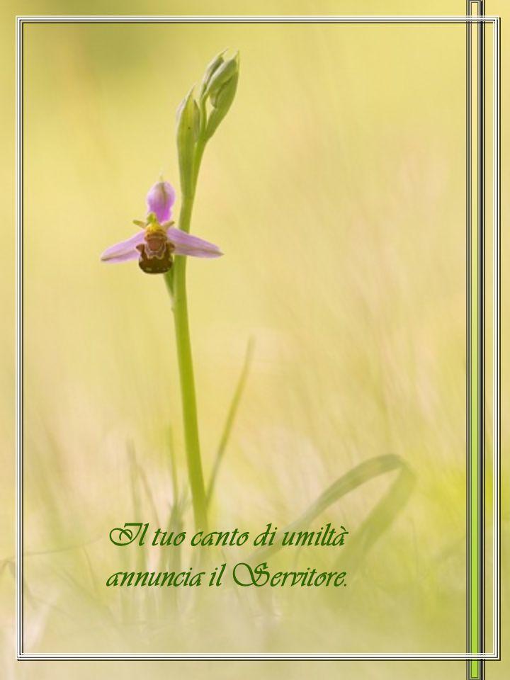 Il tuo canto di umiltà annuncia il Servitore.
