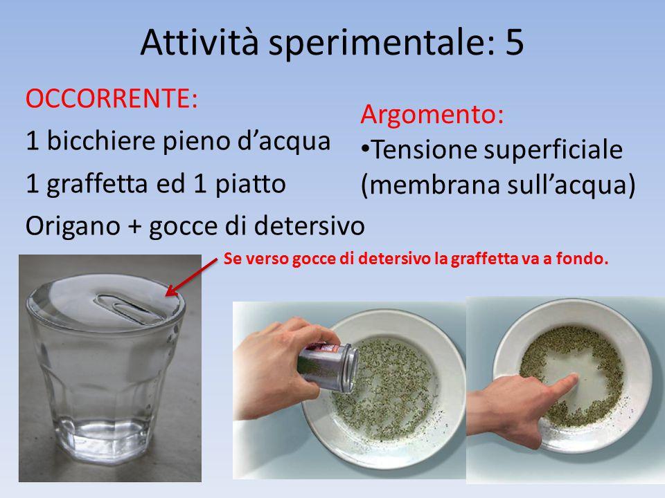 Attività sperimentale: 5 OCCORRENTE: 1 bicchiere pieno d'acqua 1 graffetta ed 1 piatto Origano + gocce di detersivo Argomento: Tensione superficiale (membrana sull'acqua) Se verso gocce di detersivo la graffetta va a fondo.