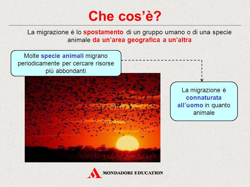 Che cos'è? La migrazione è lo spostamento di un gruppo umano o di una specie animale da un'area geografica a un'altra Molte specie animali migrano per