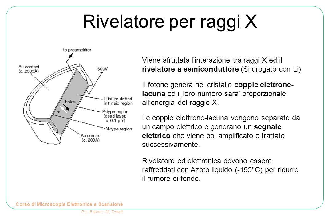 Rivelatore per raggi X Corso di Microscopia Elettronica a Scansione P.L. Fabbri – M. Tonelli Viene sfruttata l'interazione tra raggi X ed il rivelator