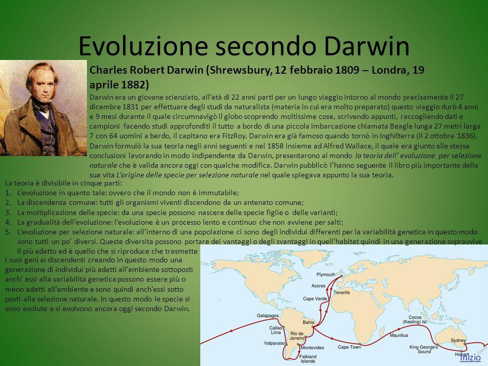 Evoluzione secondo Darwin Inizio Charles Robert Darwin (Shrewsbury, 12 febbraio 1809 – Londra, 19 aprile 1882) Darwin era un giovane scienziato, all'e