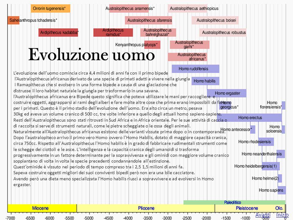 Evoluzione uomo Avanti Inizio Indietro L'Homo ergaster visse in africa nel periodo compreso tra i 2 milioni e 1 milione di anni fa.