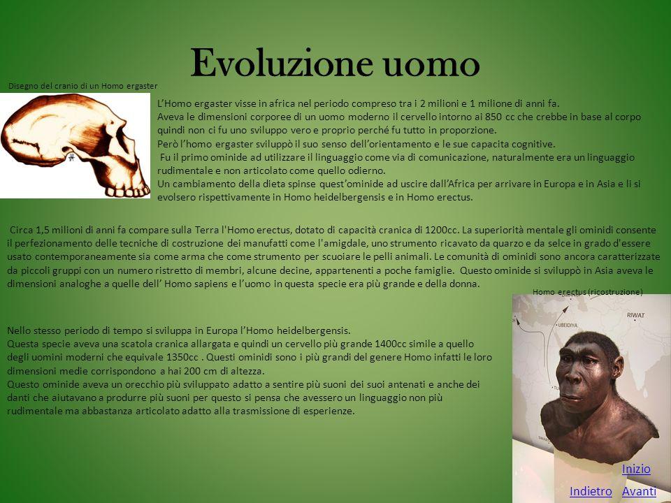 Evoluzione uomo Avanti Inizio Indietro L'Homo ergaster visse in africa nel periodo compreso tra i 2 milioni e 1 milione di anni fa. Aveva le dimension