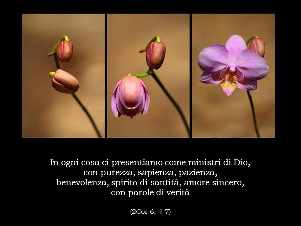 In ogni cosa ci presentiamo come ministri di Dio, con purezza, sapienza, pazienza, benevolenza, spirito di santità, amore sincero, con parole di verit