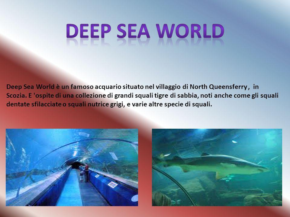 Deep Sea World è un famoso acquario situato nel villaggio di North Queensferry, in Scozia. E 'ospite di una collezione di grandi squali tigre di sabbi