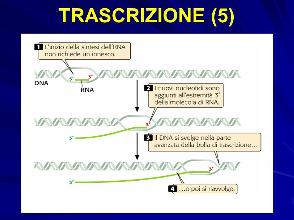 TRASCRIZIONE (5)