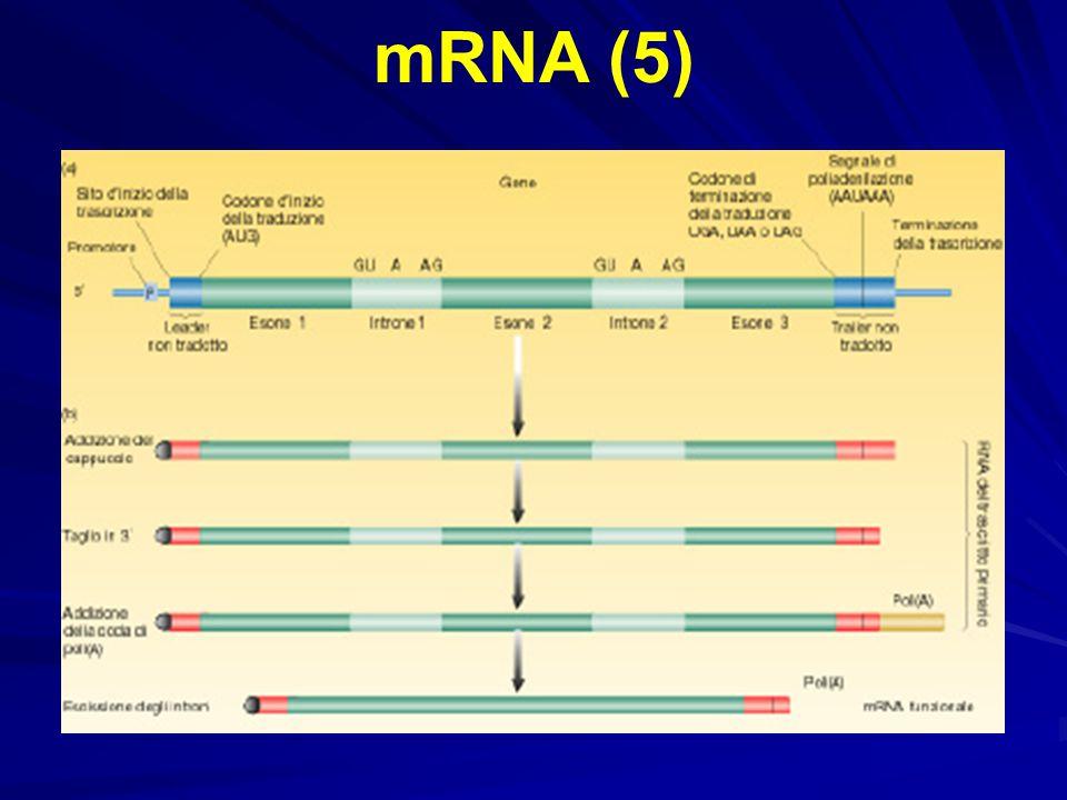 mRNA (5)