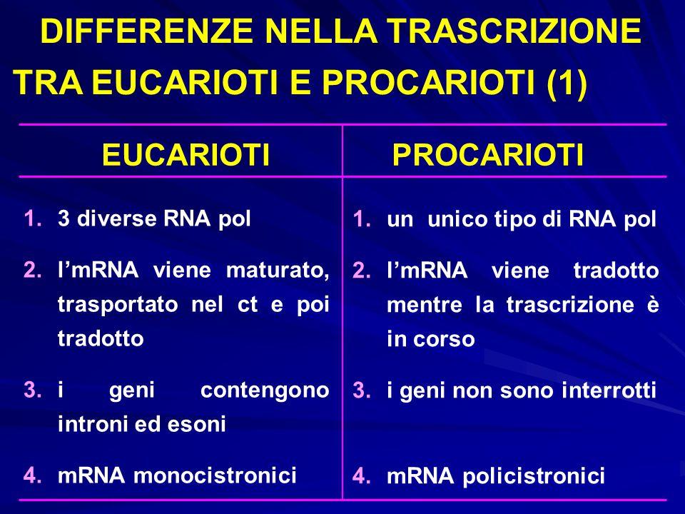 1.un unico tipo di RNA pol 2.l'mRNA viene tradotto mentre la trascrizione è in corso 3.i geni non sono interrotti 4.mRNA policistronici 1.3 diverse RN