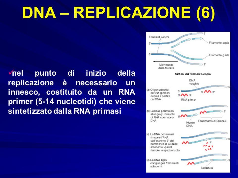 DNA – REPLICAZIONE (6) nel punto di inizio della replicazione è necessario un innesco, costituito da un RNA primer (5-14 nucleotidi) che viene sinteti