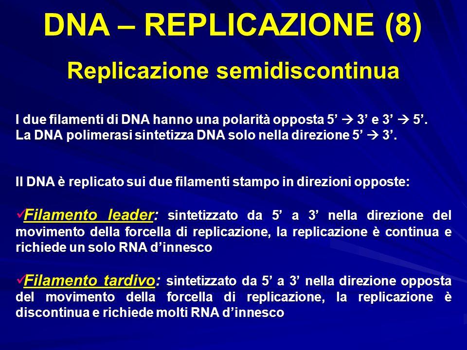 DNA – REPLICAZIONE (8) Replicazione semidiscontinua I due filamenti di DNA hanno una polarità opposta 5'  3' e 3'  5'. La DNA polimerasi sintetizza