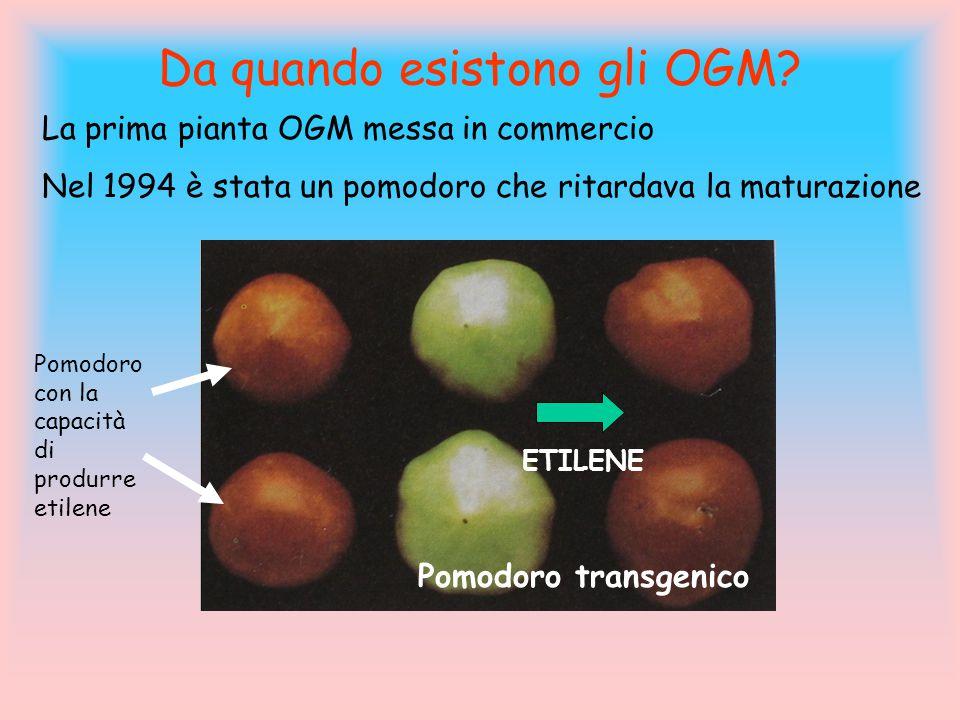 Da quando esistono gli OGM? La prima pianta OGM messa in commercio Nel 1994 è stata un pomodoro che ritardava la maturazione Pomodoro con la capacità