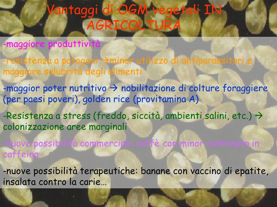 Vantaggi di OGM vegetali IN AGRICOLTURA -maggiore produttività -resistenza a patogeni  minor utilizzo di antiparassitari e maggiore salubrità degli a