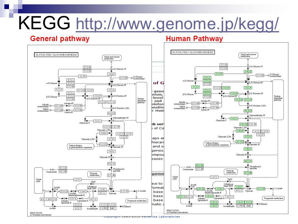 KEGG http://www.genome.jp/kegg/ http://www.genome.jp/kegg/ General pathway Human Pathway