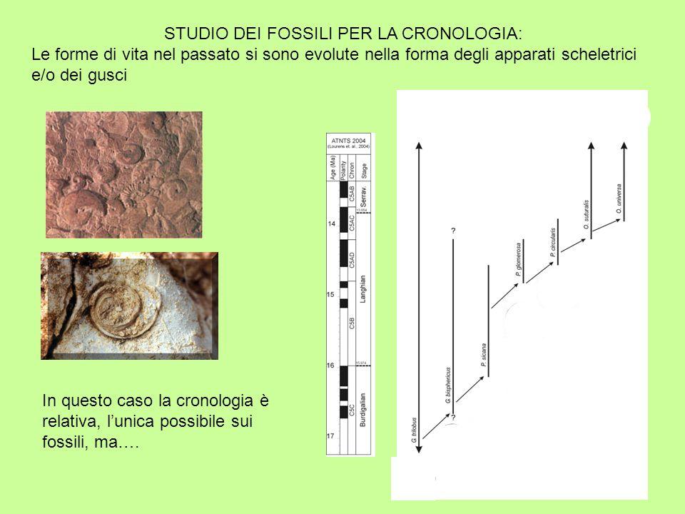 STUDIO DEI FOSSILI PER LA CRONOLOGIA: Le forme di vita nel passato si sono evolute nella forma degli apparati scheletrici e/o dei gusci In questo caso la cronologia è relativa, l'unica possibile sui fossili, ma….