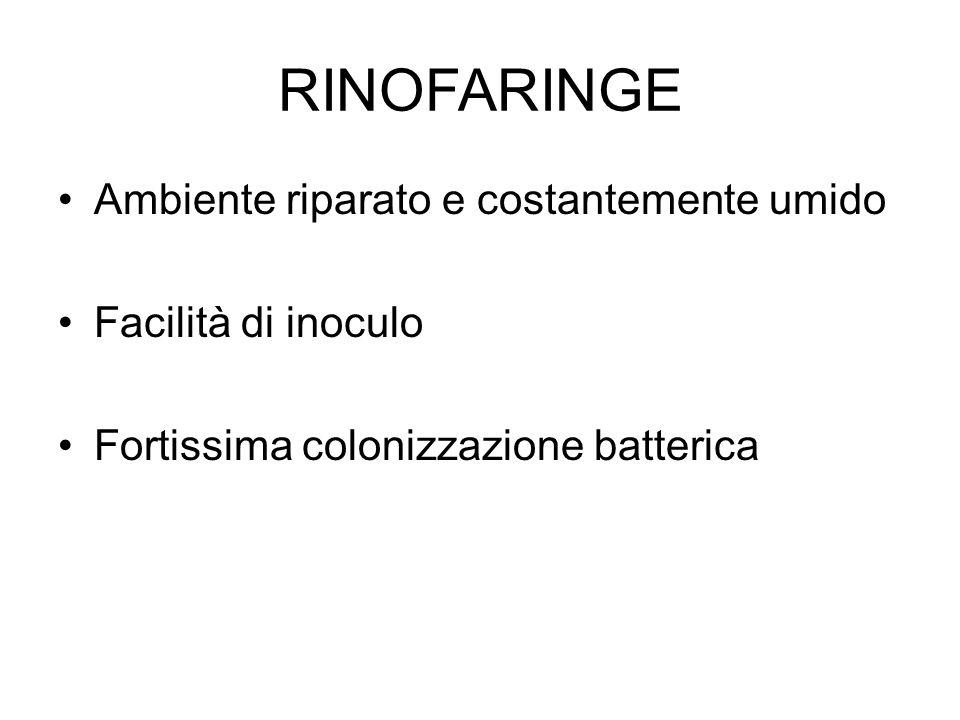 RINOFARINGE Ambiente riparato e costantemente umido Facilità di inoculo Fortissima colonizzazione batterica