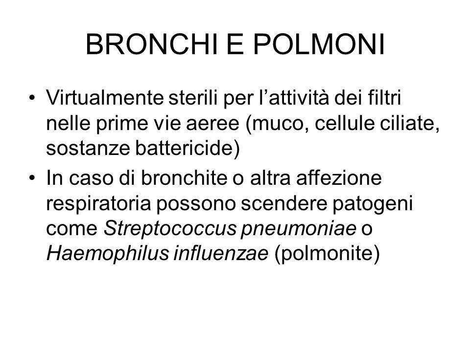 BRONCHI E POLMONI Virtualmente sterili per l'attività dei filtri nelle prime vie aeree (muco, cellule ciliate, sostanze battericide) In caso di bronch