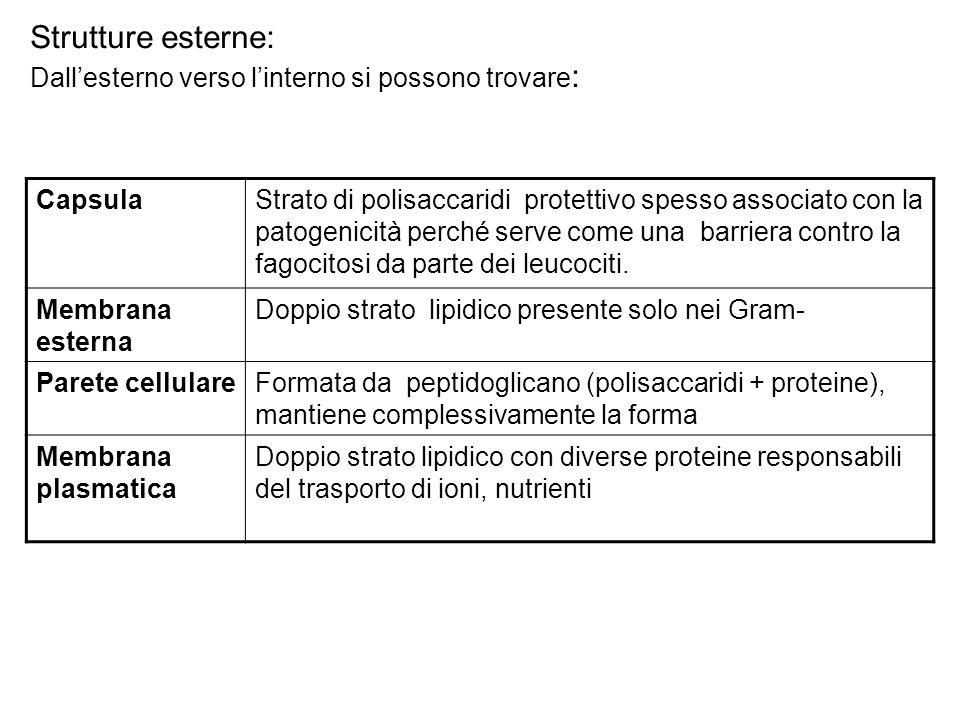 Strutture esterne: Dall'esterno verso l'interno si possono trovare : CapsulaStrato di polisaccaridi protettivo spesso associato con la patogenicità pe