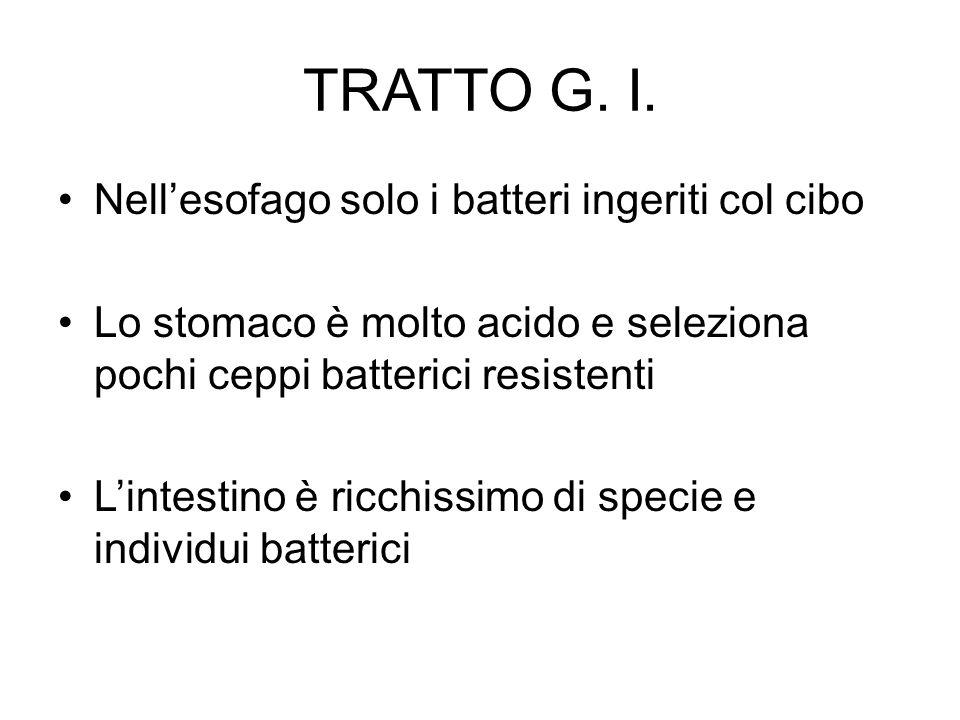 TRATTO G. I. Nell'esofago solo i batteri ingeriti col cibo Lo stomaco è molto acido e seleziona pochi ceppi batterici resistenti L'intestino è ricchis