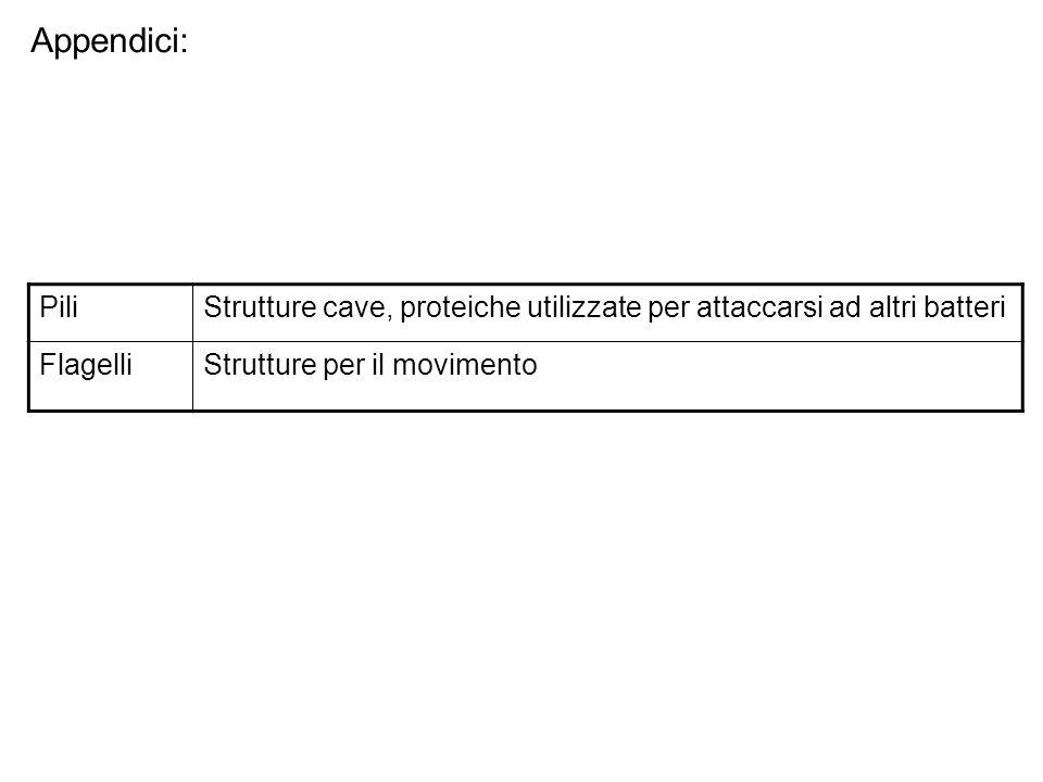 Appendici: PiliStrutture cave, proteiche utilizzate per attaccarsi ad altri batteri FlagelliStrutture per il movimento