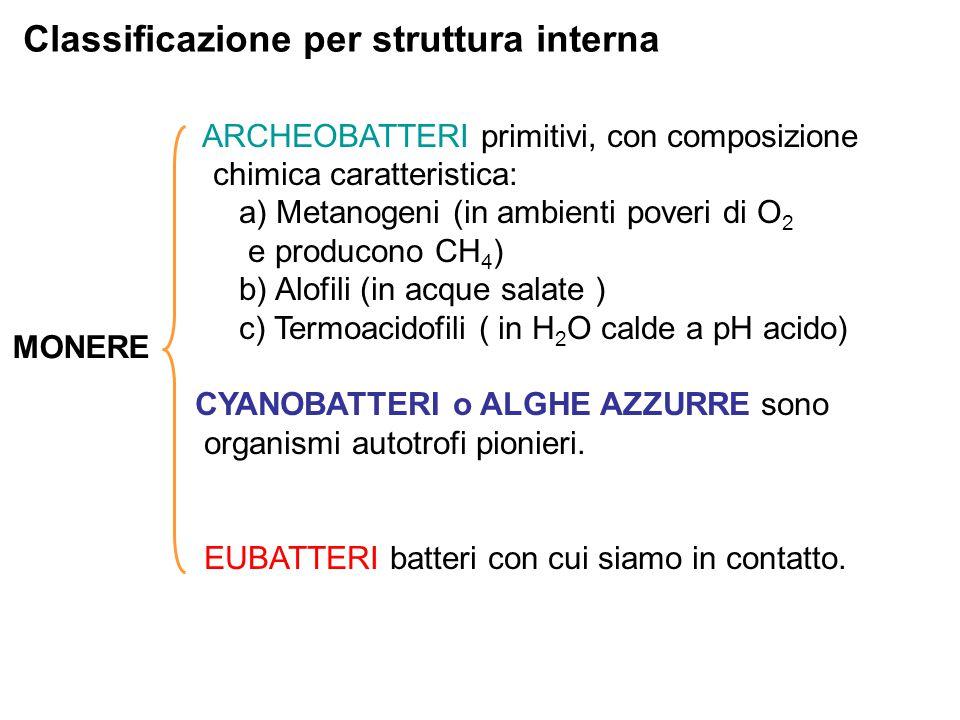 Classificazione per struttura interna MONERE ARCHEOBATTERI primitivi, con composizione chimica caratteristica: a) Metanogeni (in ambienti poveri di O