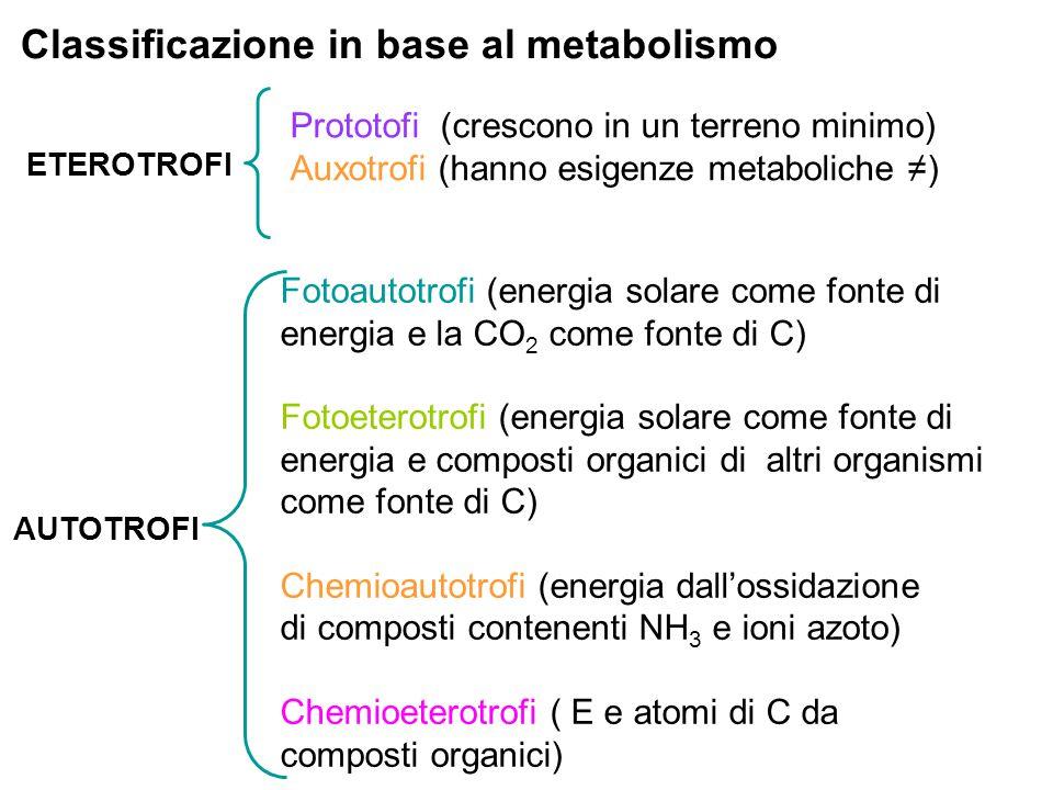 Classificazione in base al metabolismo ETEROTROFI AUTOTROFI Fotoautotrofi (energia solare come fonte di energia e la CO 2 come fonte di C) Fotoeterotr