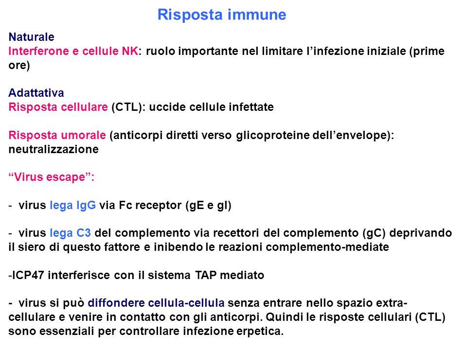 Risposta immune Naturale Interferone e cellule NK: ruolo importante nel limitare l'infezione iniziale (prime ore) Adattativa Risposta cellulare (CTL):