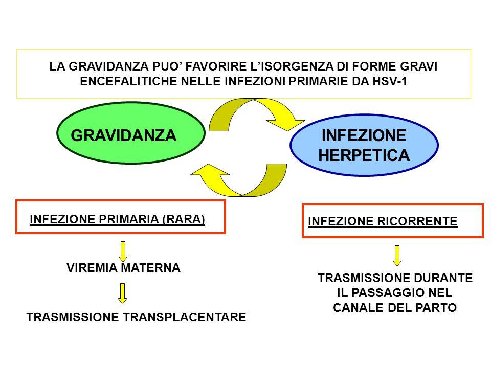 LA GRAVIDANZA PUO' FAVORIRE L'ISORGENZA DI FORME GRAVI ENCEFALITICHE NELLE INFEZIONI PRIMARIE DA HSV-1 GRAVIDANZA INFEZIONE HERPETICA INFEZIONE PRIMAR