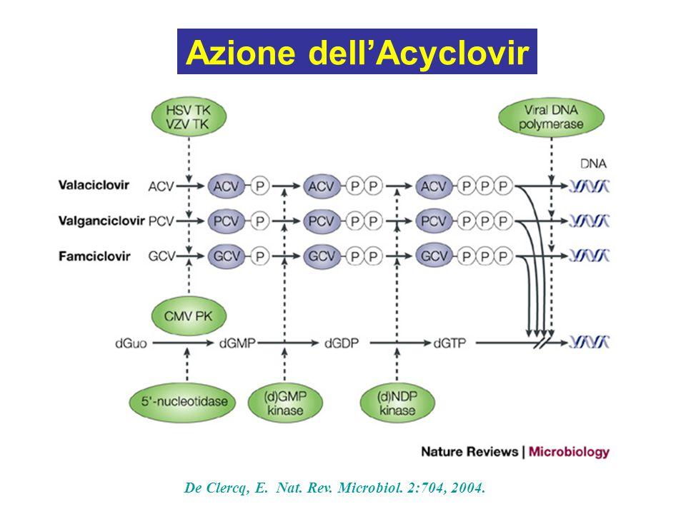 Azione dell'Acyclovir De Clercq, E. Nat. Rev. Microbiol. 2:704, 2004.