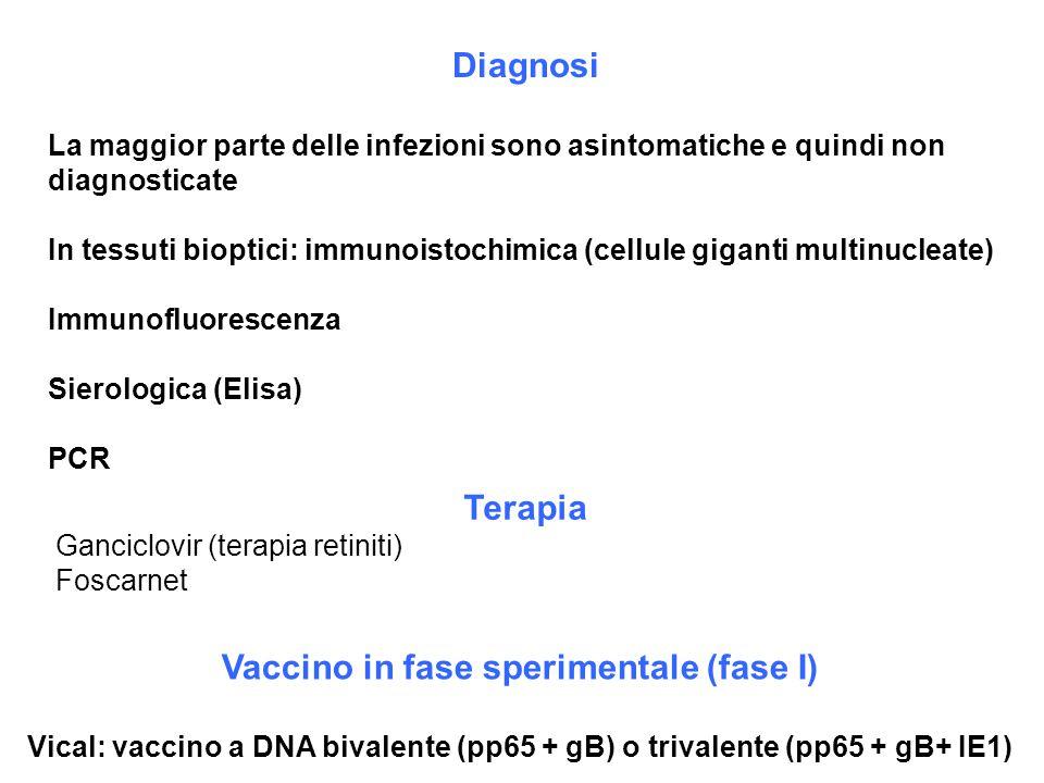 Diagnosi La maggior parte delle infezioni sono asintomatiche e quindi non diagnosticate In tessuti bioptici: immunoistochimica (cellule giganti multin