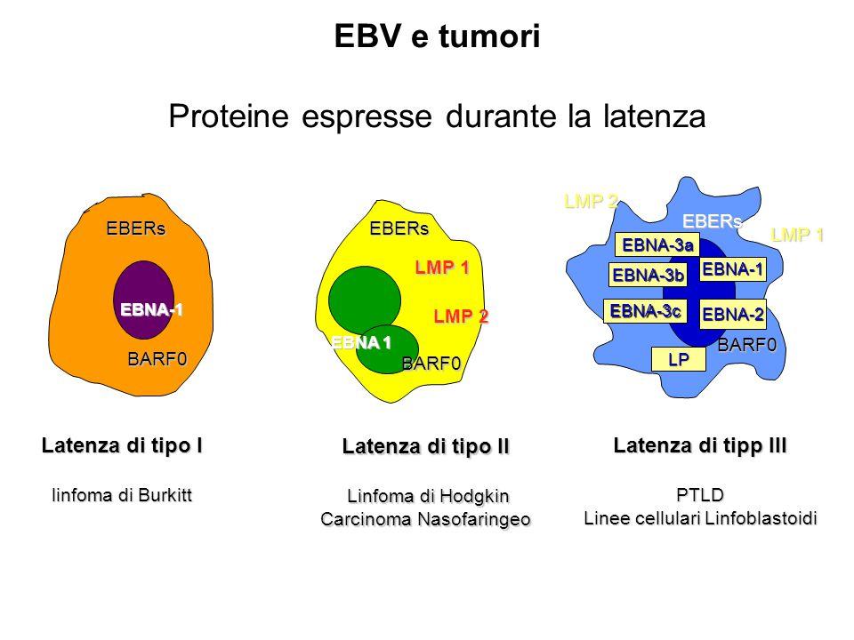 Latenza di tipo II Linfoma di Hodgkin Linfoma di Hodgkin Carcinoma Nasofaringeo Latenza di tipp III PTLD Linee cellulari Linfoblastoidi EBNA-1 LMP 1 L