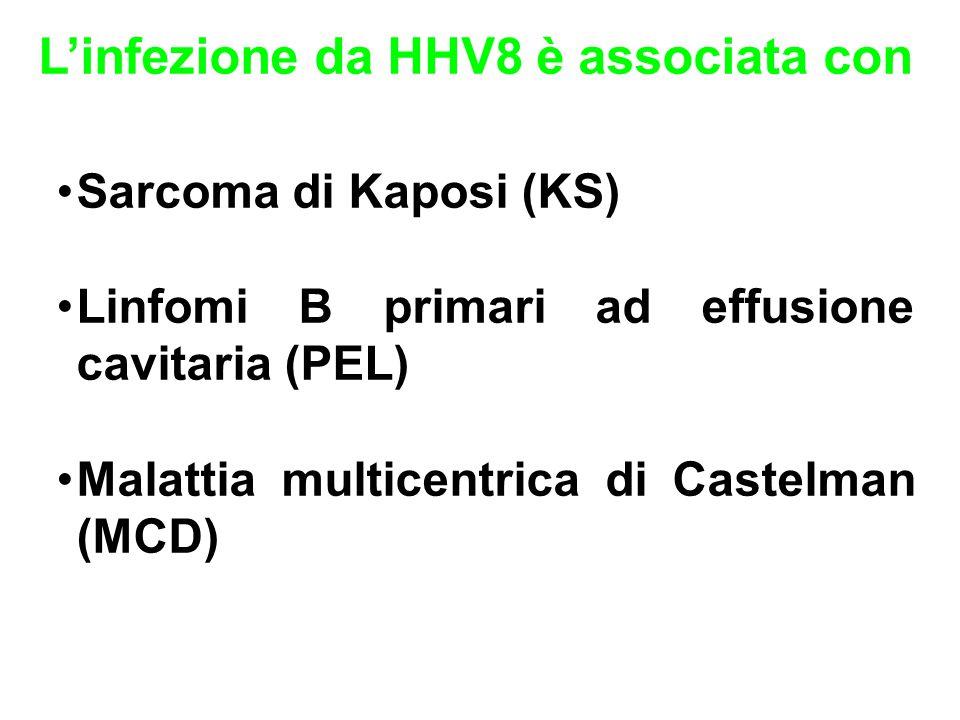L'infezione da HHV8 è associata con Sarcoma di Kaposi (KS) Linfomi B primari ad effusione cavitaria (PEL) Malattia multicentrica di Castelman (MCD)