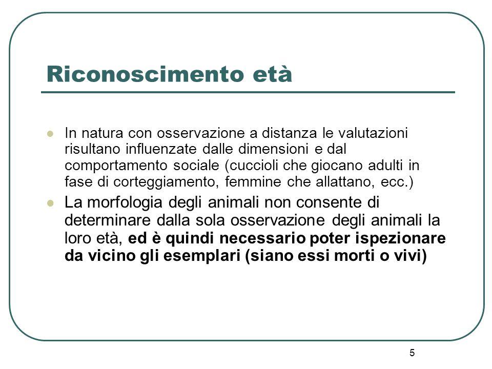5 Riconoscimento età In natura con osservazione a distanza le valutazioni risultano influenzate dalle dimensioni e dal comportamento sociale (cuccioli
