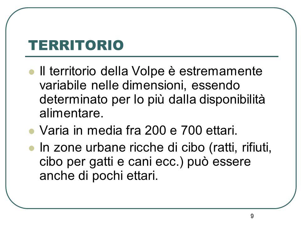 9 TERRITORIO Il territorio della Volpe è estremamente variabile nelle dimensioni, essendo determinato per lo più dalla disponibilità alimentare. Varia
