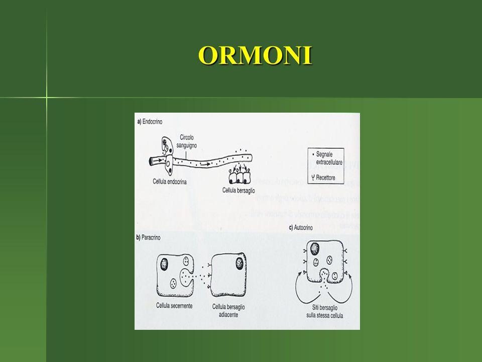 FISIOPATOLOGIA DEL SISTEMA ENDOCRINO Il Sistema endocrino regola le funzioni cellulari mediante messaggeri molecolari od ormoni secreti da ghiandole endocrine o cellule ghiandolari di vari tessuti (es.